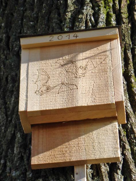 unsere selbstgebauten Fledermauskästen